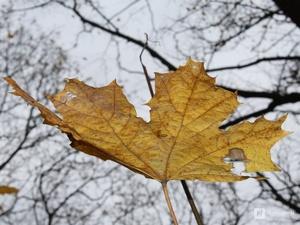Дожди и похолодание до +5°С принесет нижегородцам наступившая неделя