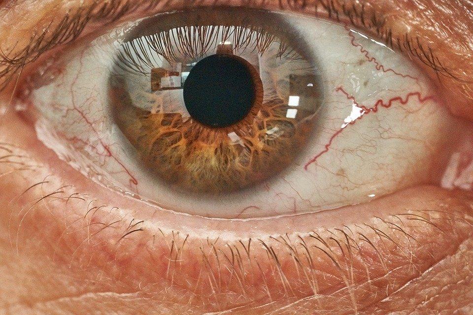 Картинки глазных яблок у людей