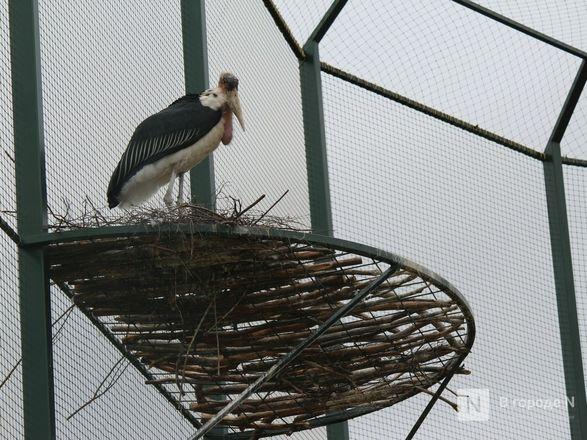 Уникальный вольер для марабу построили в нижегородском зоопарке - фото 6