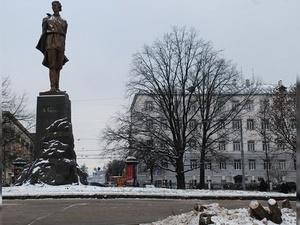Живая изгородь появится на месте пеньков на площади Горького (ФОТО)