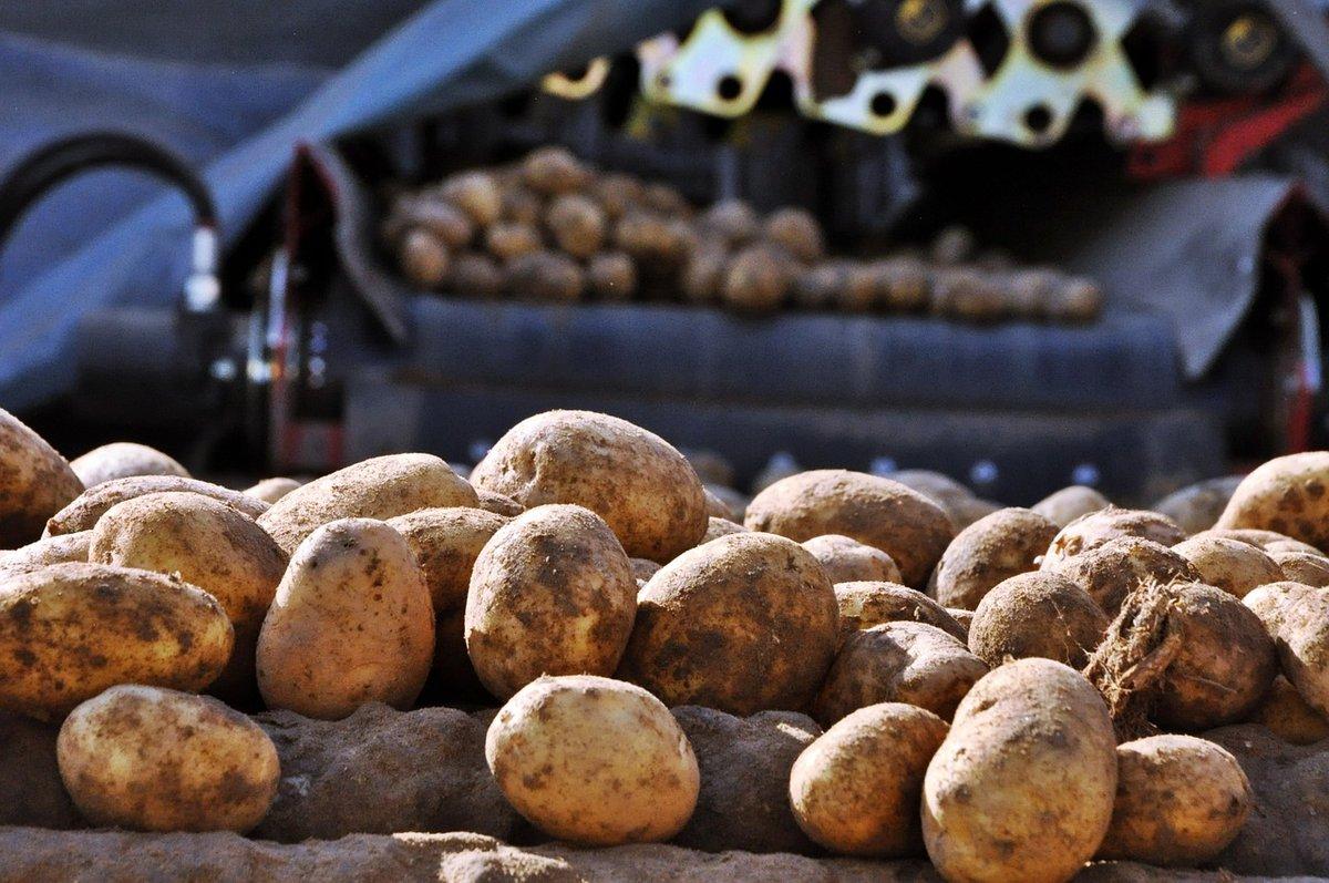 Как нужно мыть овощи и фрукты, чтобы избежать отравления - фото 2
