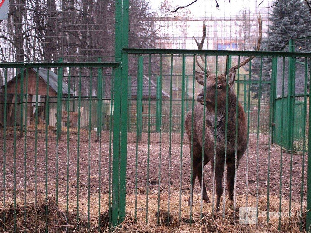 Чем живет «Мишутка»: репортаж из закрытого нижегородского зоопарка - фото 5