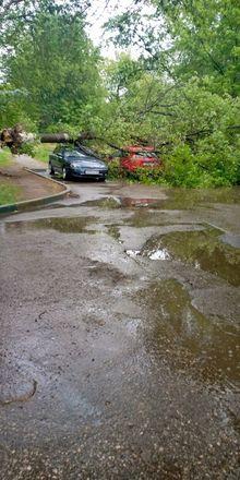 Машины завалило деревьями после урагана в Нижегородской области - фото 3