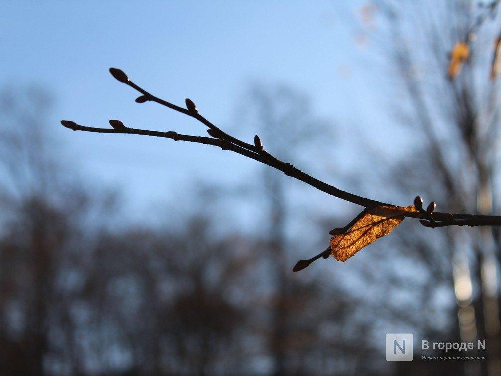 Потепление до +12°С и дожди придут в Нижний Новгород - фото 1