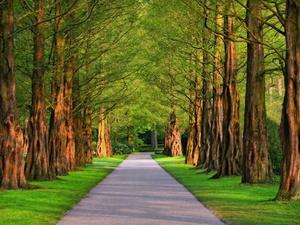 «Ростелеком»: Светлоярский парк в Нижнем Новгороде стал технологичным