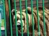 Львы, медведи и волки, оставшиеся в «Мишутке», переедут в Балахну