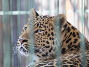 Новоселье в зоопарке: обитатели «Лимпопо» получили современные вольеры