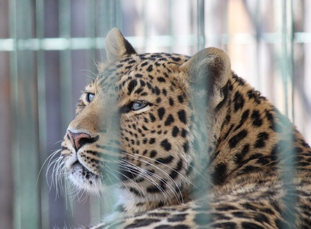 Новоселье в зоопарке