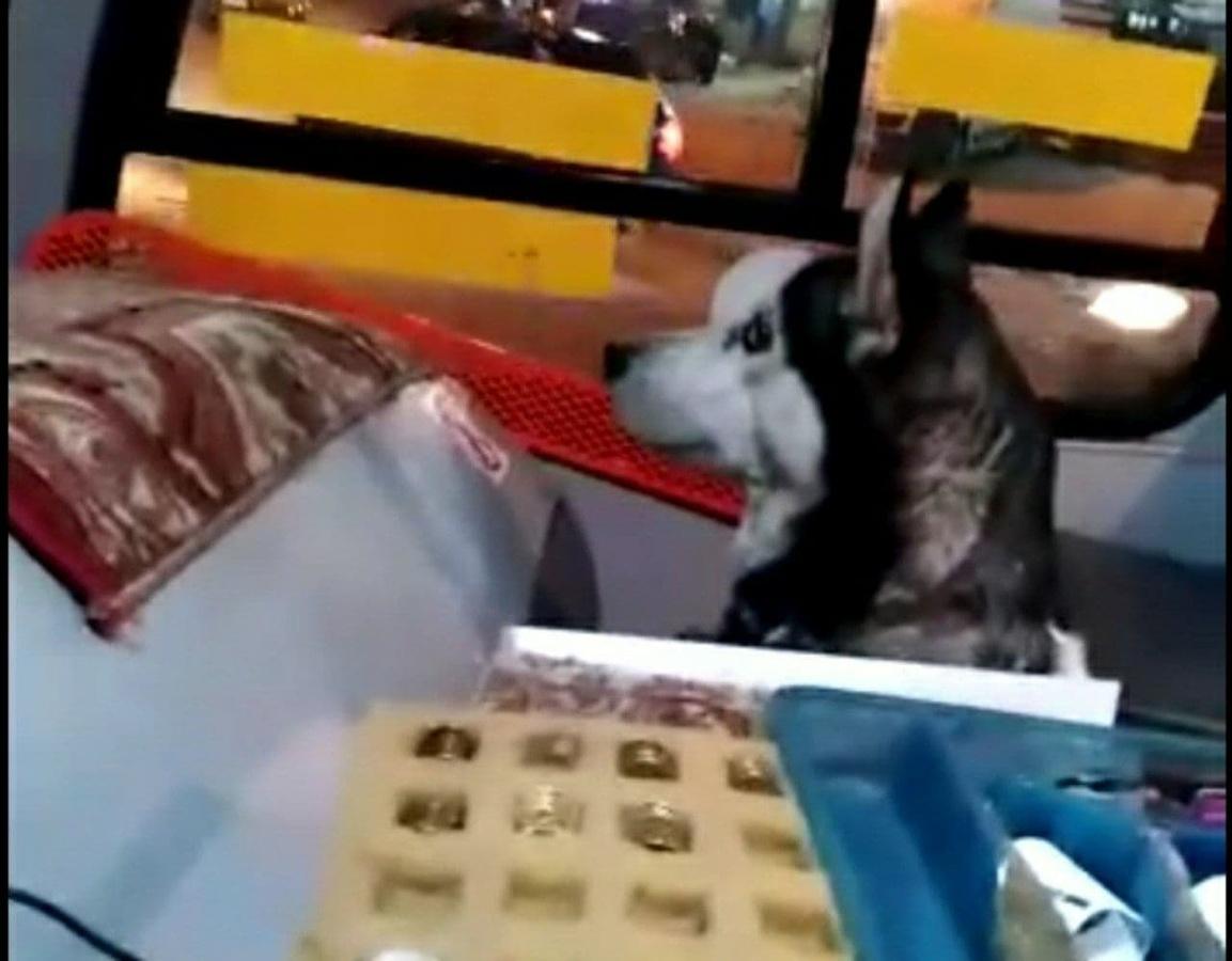Собака-«кондуктор» из нижегородской маршрутки вернулась домой - фото 1
