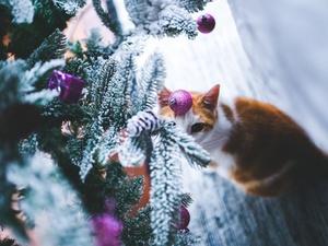 Приметы на Старый Новый год: как принято отмечать этот праздник
