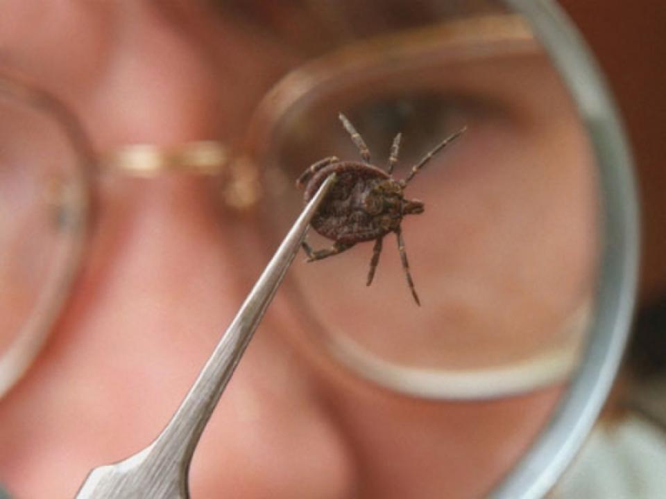 Более 30 энцефалитных клещей обнаружили в Нижегородской области - фото 1